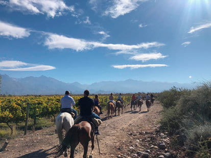 HORSEBACK RIDING IN OUR VINEYARD